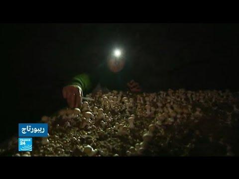 مزارع فرنسي يحول نفقا مهجورة للسكة الحديدية إلى مزرعة فطر  - نشر قبل 2 ساعة