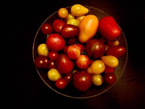 Growing tomatoes in Houston