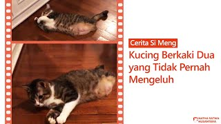 Belajar Bersyukur dari Si Meng, Kucing Berkaki Dua