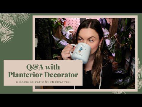 Q&A - Get to know Planterior Decorator!