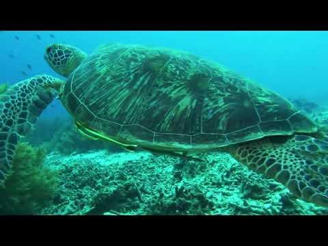 Panglao Underwater