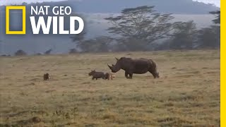 Rhino Mom Teaches Hungry Hyenas Not to Mess With Her Calf | Nat Geo Wild