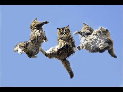 Мультик Леди Баг и Супер кот смотреть онлайн все серии