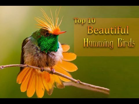 Top 10 Most Beautiful Humming Birds  | 2018