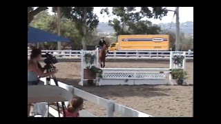 """Cosmic"" Winning Hunter/Jumper/Equitation Horse- SOLD!!!"