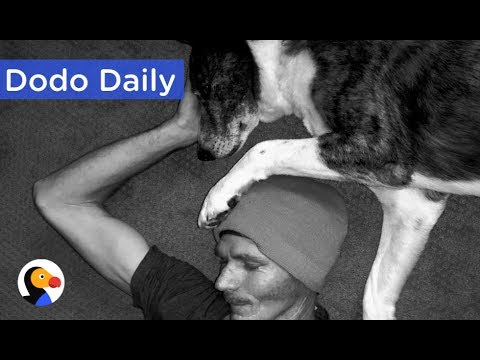 Dog Helps Dad Through Cancer Treatment: Best Animal Videos | The Dodo Daily