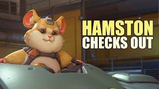 Hamston Checks Out thumbnail