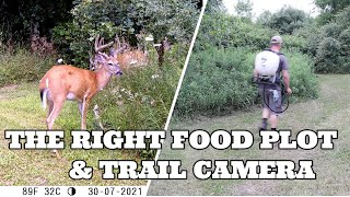 THE RIGHT FOOD PLOT AND TRAIL CAMERA