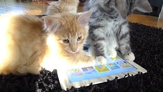 Animals Playing on iPads Compilation - Funny & Cute
