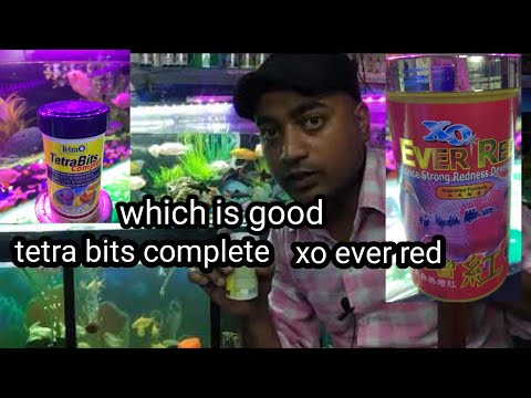 Which Food Is Good Tetra Bits Complete  Xo Ever Red Flowerhorn