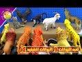 حيوانات الغابه و الحيوانات الحقيقية كرتونه كامله - العاب اطفال
