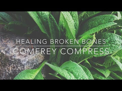 Bone Healing Comfrey Compress: Herbal Healing - Homesteading Family