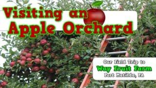 Gambar cover Apple Field Trip to Way Fruit Farm-- Port Matilda, PA--- Harry Kindergarten!!!!!