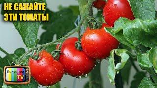 Больше никогда не буду выращивать эти томаты, они кислые и невкусные