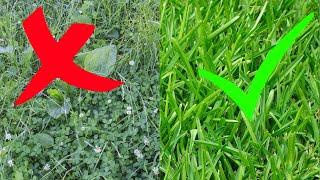 Unkraut Im Rasen Erfolgreich & Ohne Chemie Entfernen - Rasen Unkraut Vermeiden Tipps / Kein Unkraut