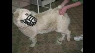 хорошее тромбоз после перелома у собак вариантом использования