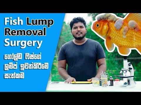 GoldFish Lump Removal Surgery HD....  FishFix SriLanka