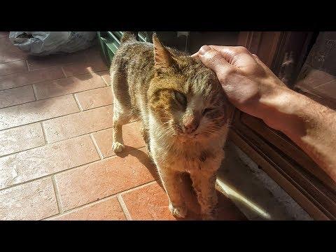 Stavo accarezzando questo gatto, poi ho scoperto che...