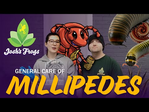 How To Keep Millipedes As Pets