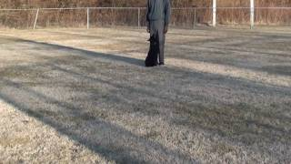 "Nashville Dog Trainer Guy 008: Advanced Obedience: Akc Obedience ""recall"""