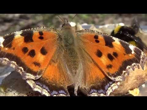 Откуда Взялся Весенний Мед для Пчел, Шмелей и Бабочек?