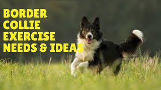 Border Collie Exercise [Needs and Ideas]