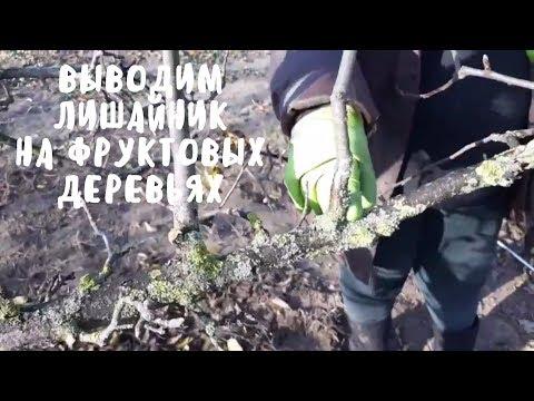 Как я боролась с лишайником на фруктовых деревьях. Мой сад. Мой опыт.