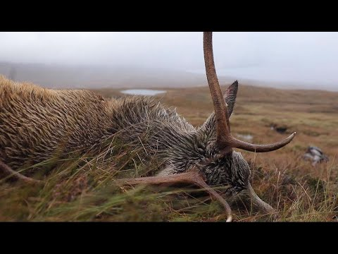 Focus - Will deer hunting become big business in Scotland?