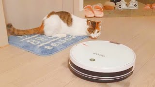 Cat vs Robotic vacuum cleaner …