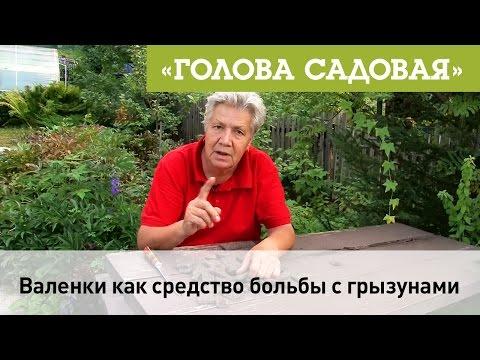 Голова садовая - Валенки как средство борьбы с грызунами