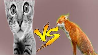 [Flashки]-Котята против лисят!!!