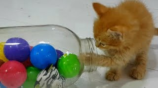 ПРИКОЛЫ С КОТАМИ. РЕАКЦИЯ СОБАКИ И КОШКИ и банка с колбасой. Funny cat videos. Cute kitten