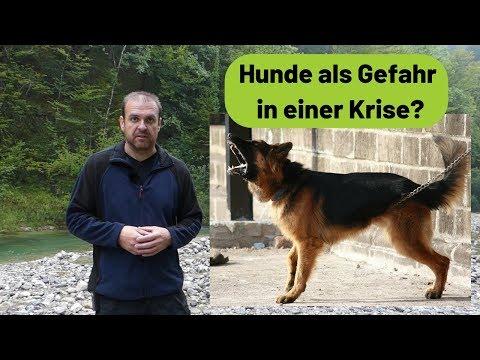 Krisenvorsorge - Hunde als Gefahr in einer Krise?