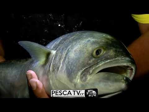 Tubertini - Come pescare i serra