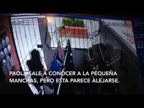 ARROJA PERRO DESDE AZOTEA EN CUAUTITLAN IZCALLI
