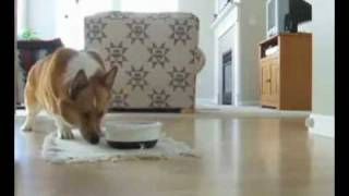 Download Video Happiest Dog Alive Begs for Food - Videos - Funny Hub.3gp MP3 3GP MP4