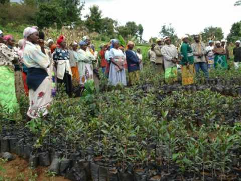 Sagana Women Fisheries Project by SGP in Mt Kenya-Kenya.wmv