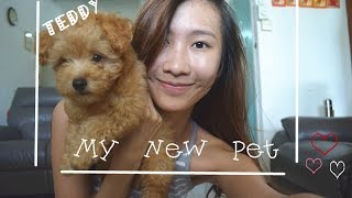 My New Pet - Teddy [poodle]