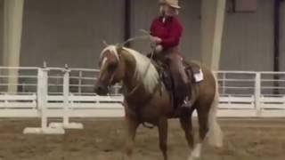 jake jacspin aqha vrh ranch riding trail