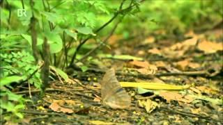 Die Tricks des Überlebens – Im Dschungel