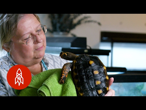 Meet Manhattan's Turtle Lady