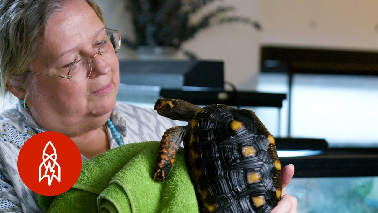 The New York Turtle and Tortoise Society