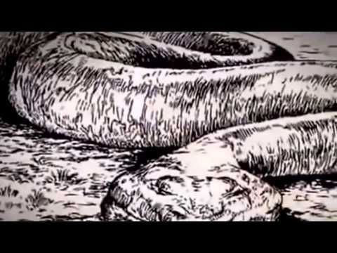 The Man Eating Anaconda Full Documentary HD National Geographic Wild 2015