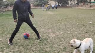 #football match boy versus dog Gaurav Bhandari boy -Pogo 🐕 #French Bulldog