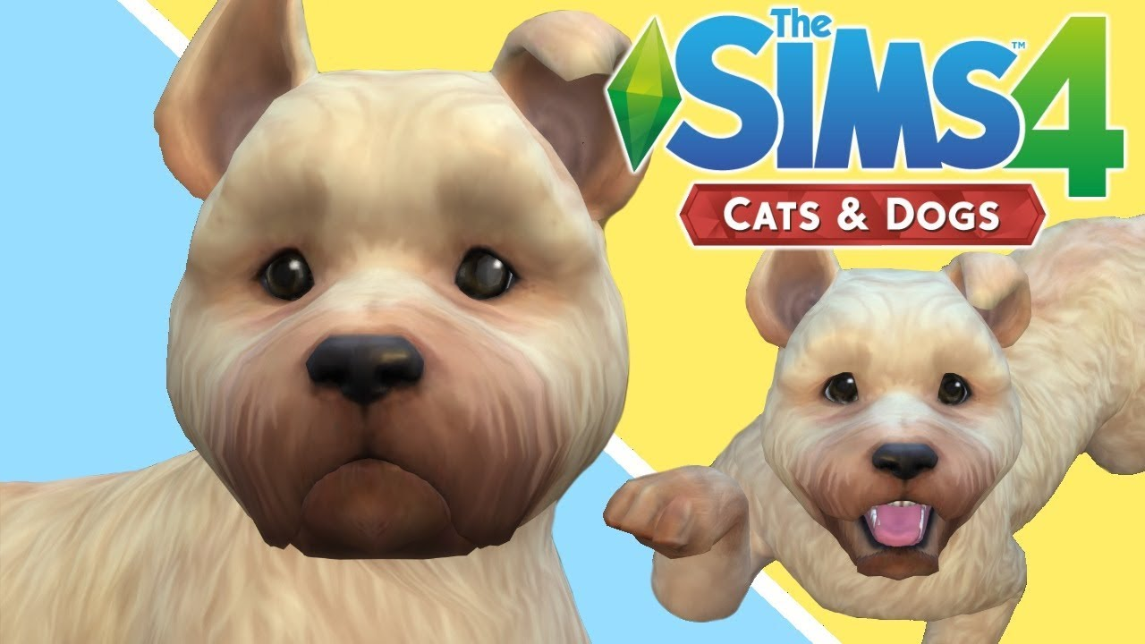 When Does Sims Cats And Dogs Come Out