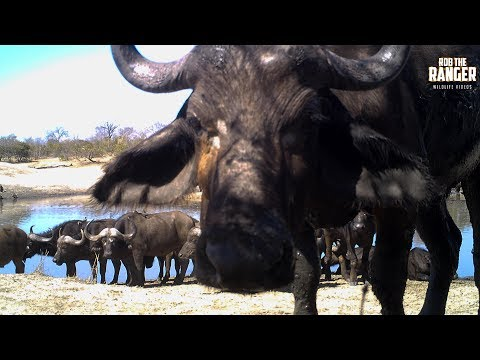 Amazing Animal Activity At A Waterhole (Trails Cam Timelapse)
