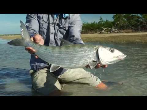 Bahamas Bonefishing - Ep #1 World Wide Fly Fishing