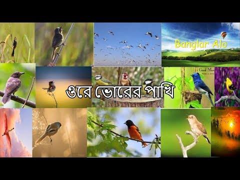 Ore Vorer Pakhi...Bangla Islamic Song...