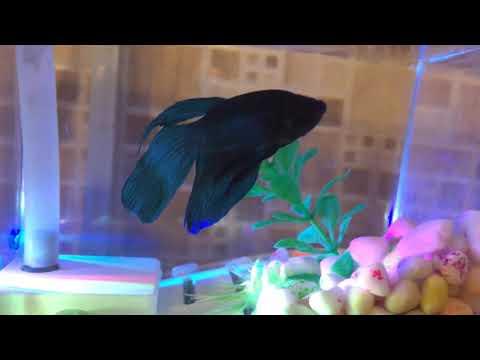 Fish The Fish