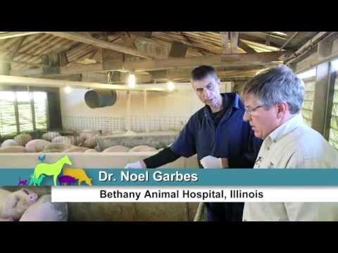 VetsOnCall – Illinois teen is fifth-gen family farmer